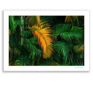 Image of Gold Palm Tree Leaf near Tzaneen - Palm d'or - by Lionel du Plessis